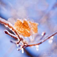 .:Frozen Leaves:.