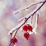 .:Frozen Sparkles:.
