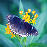 .:Blue Wings:. by RHCheng