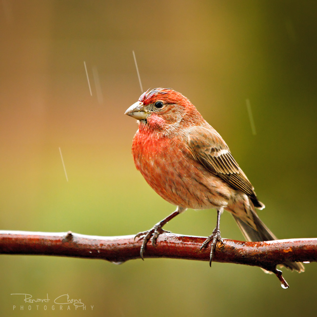 .:Standing in the Rain:.