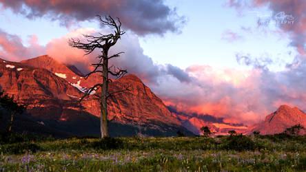 .:Skeleton Tree Sunrise:. by RHCheng