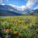.:Glacier Wild Flowers:.