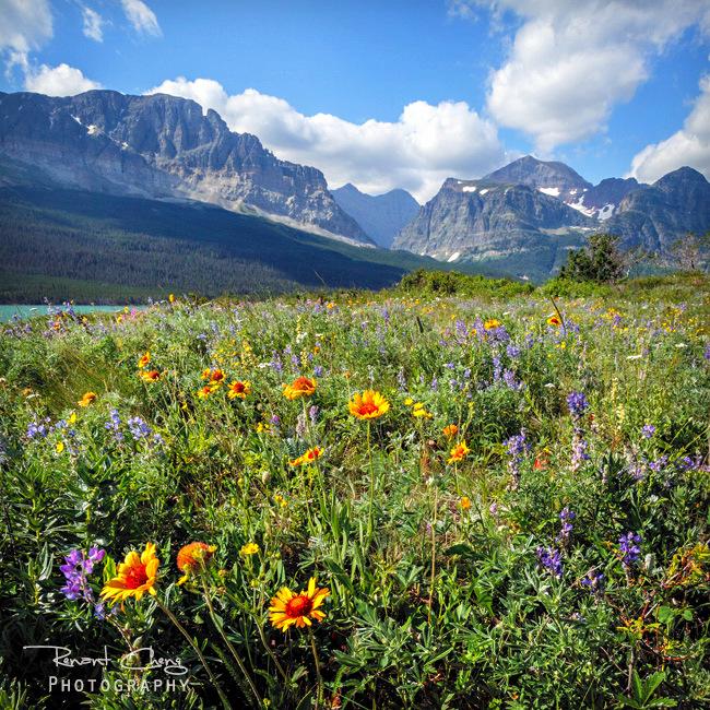 .:Glacier Wild Flowers:. by RHCheng