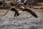 .:Fishing Action:.