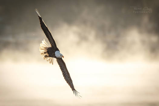 .:Flying in the Mist:.