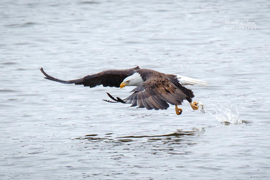 .:Fish Grab:. by RHCheng
