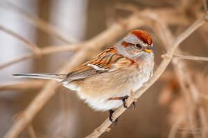 .:Little Sparrow:.