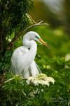 .:Great Egret:.