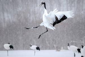 .:Kung Fu Crane:. by RHCheng