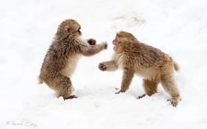 .:Kung Fu Monkeys:. by RHCheng