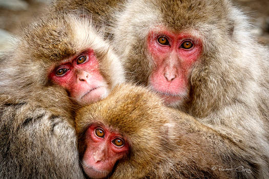 .:A Family Portrait:.