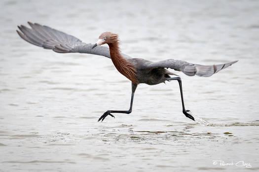 .:Walk on Water:.