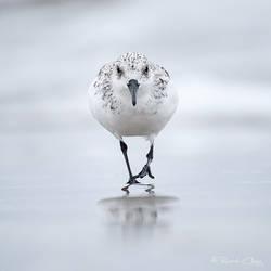 .:Walk on Beach:. by RHCheng