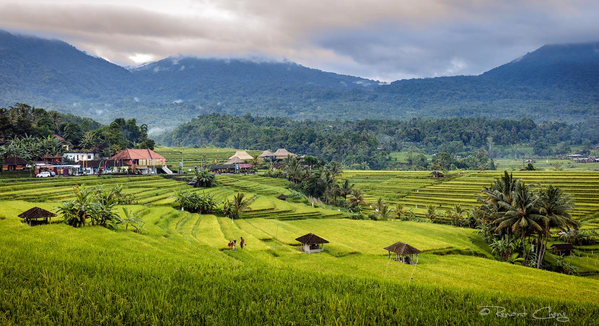 .:Jatiluwih Rice Terrace:. by RHCheng