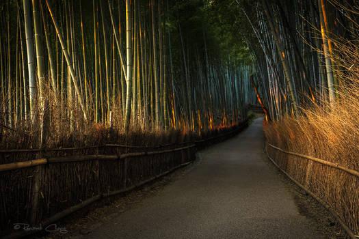 .:Arashiyama Bamboo Forest:.