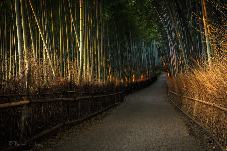 .:Arashiyama Bamboo Forest:. by RHCheng