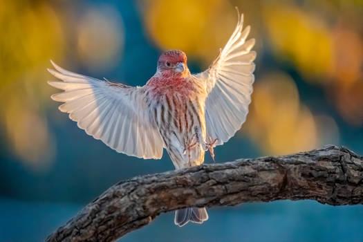 .:Wings:.