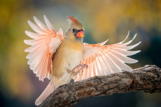 .:Wings II:.