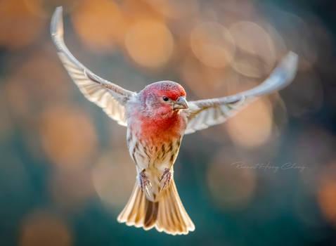 .:Wings IV:.