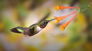 .:Flying Jewel II:.