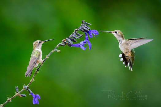 .:Flying Jewel X:.