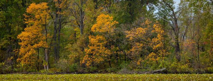 .:Autumn Panorama:.