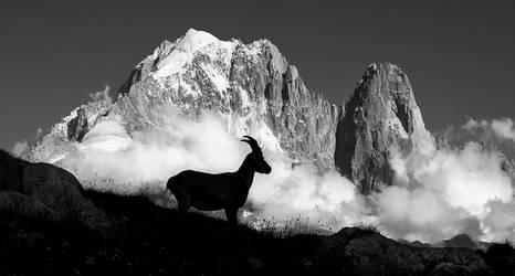 Ibex Silhouette by RobertoBertero