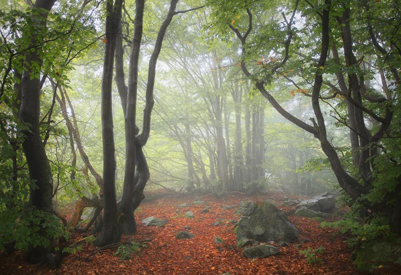 Light Through the Woods by RobertoBertero