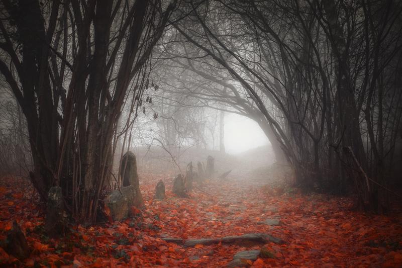 Incantation in the Woods by RobertoBertero
