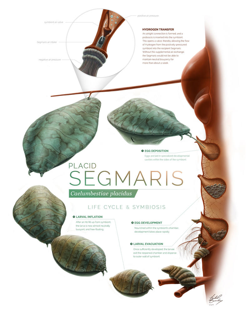Segmaris-full by MichaelBeaudry
