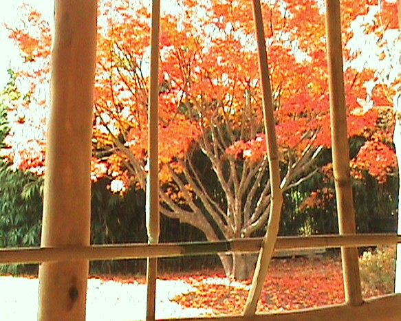 orange by iris1999