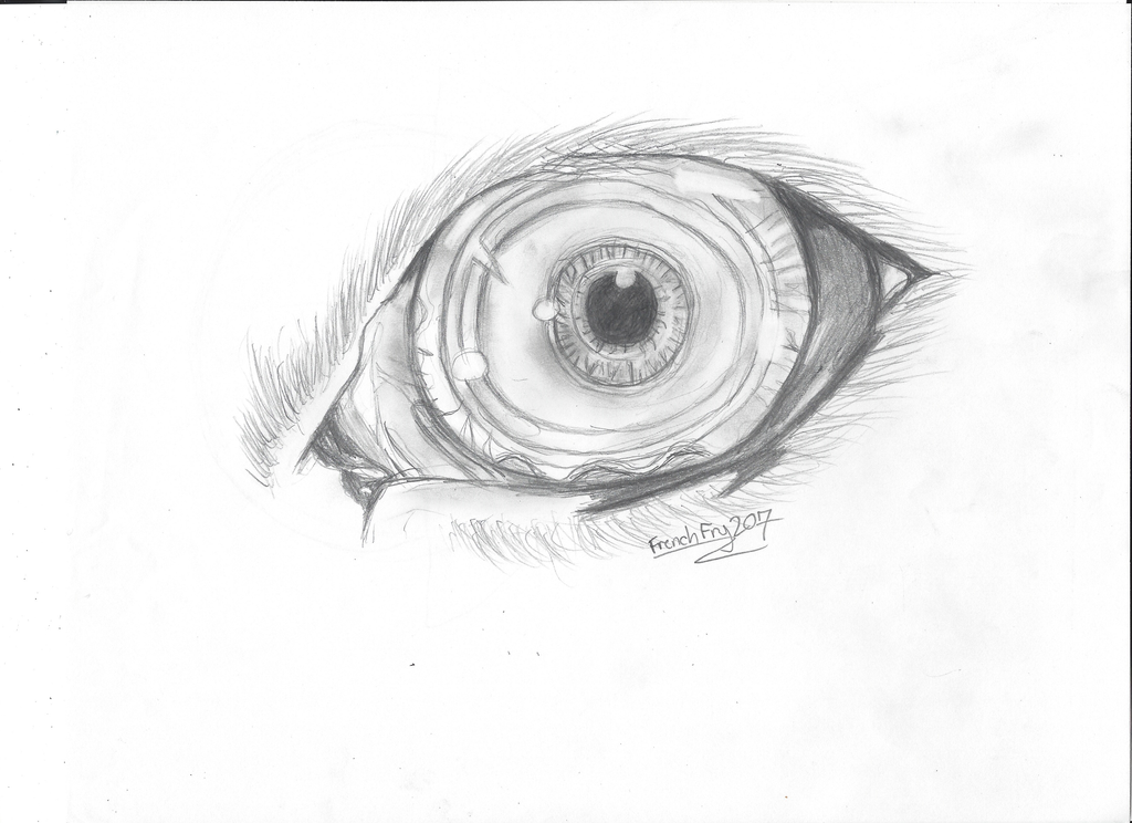 Realistic Creature Eye ( redraw) by Frenchfry207