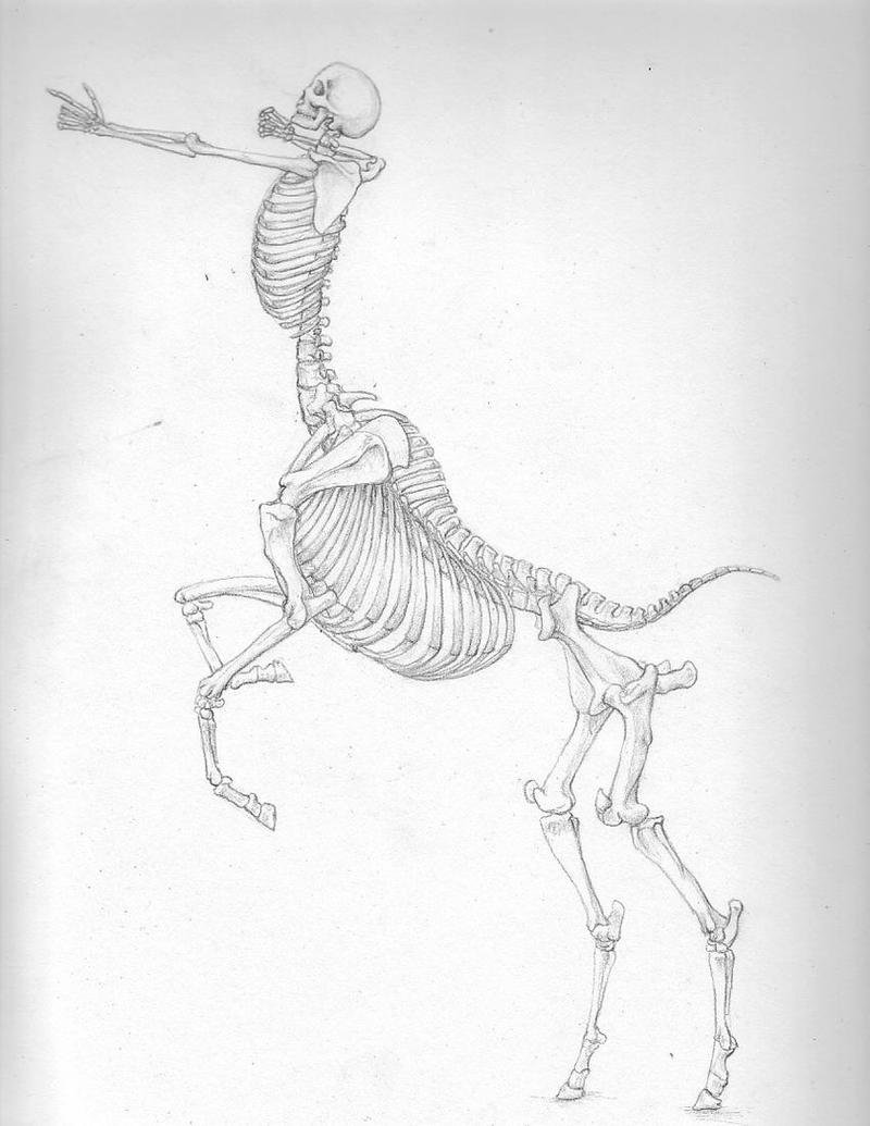 -Centaur Skeleton- by Banvivirie