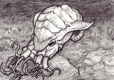 Plated cephalopod illustration ACEO by Banvivirie