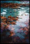 A Pond by ZoSo74