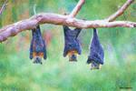 Day 22 Bat-urday
