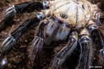 Drawlloween 2017 Day 7 Cobweb Crawlers