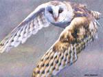 Drawlloween 2017 Day 14 Owl Be Back