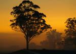 Kemps Sunrise
