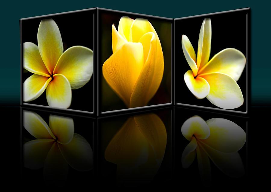 Frangipani Triptych by FireflyPhotosAust