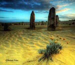 Desert Beauty by FireflyPhotosAust