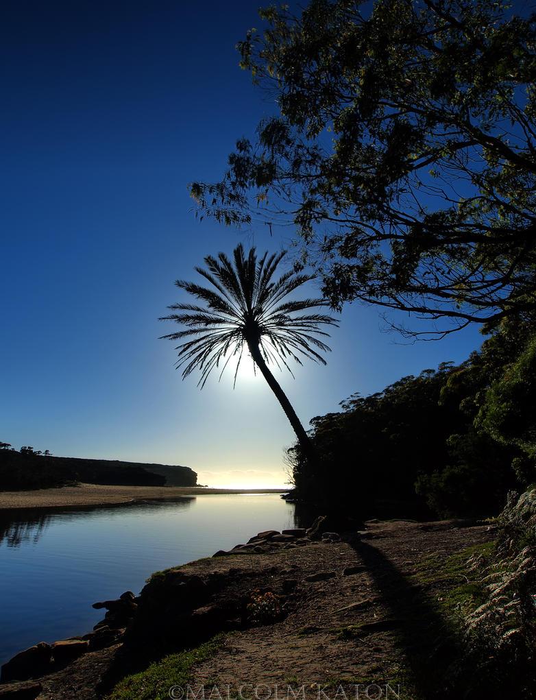Wattamolla Palm by FireflyPhotosAust