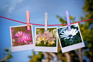 Dried Flower Arrangement by FireflyPhotosAust