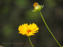 Colours of Summer by FireflyPhotosAust