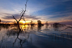 Menindee Lake by FireflyPhotosAust