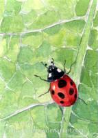 Leaf Ladybug ACEO by Pannya
