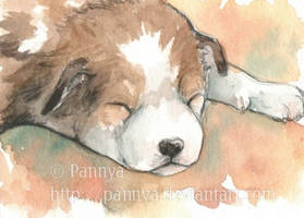 Newborn puppy ACEO by Pannya