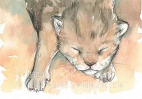 Newborn kitten ACEO by Pannya
