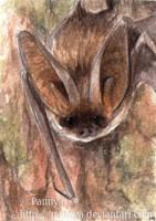 Long-eared bat ACEO by Pannya