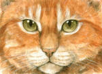 Ginger cat eyes ACEO
